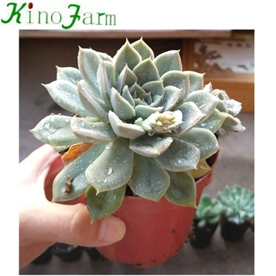 Indoor Succulent House Plants